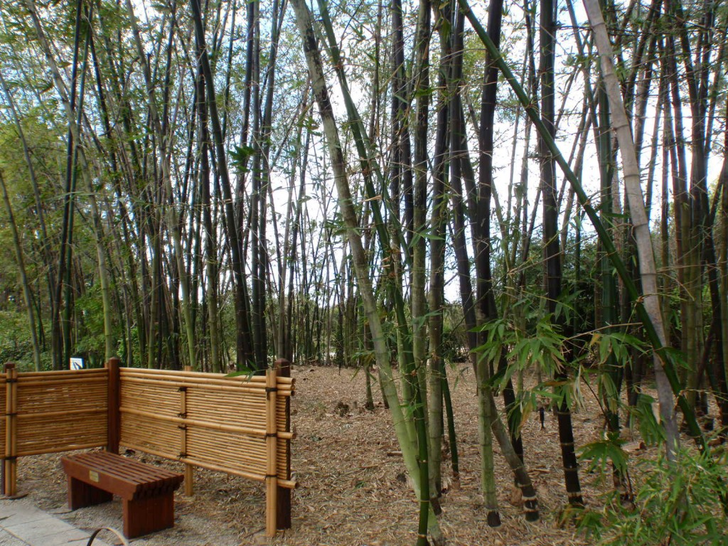 Bamboo Grove at Morkami Gardens